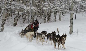 Mountain Mushers