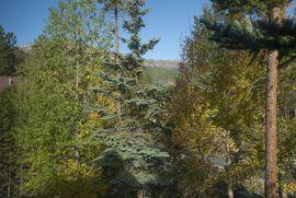 24 White Cloud DRIVE # 0 BRECKENRIDGE, Colorado 80424 - Image