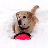 Powder Paws - A Dog's Guide