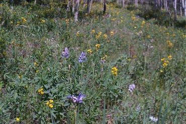 0 Michigan Hill ROAD JEFFERSON, Colorado - Image 1