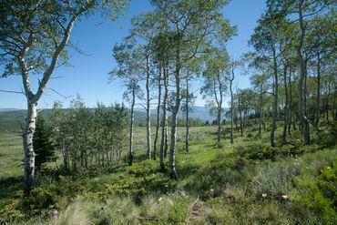 92 Pine Marten Edwards, CO - Image 11