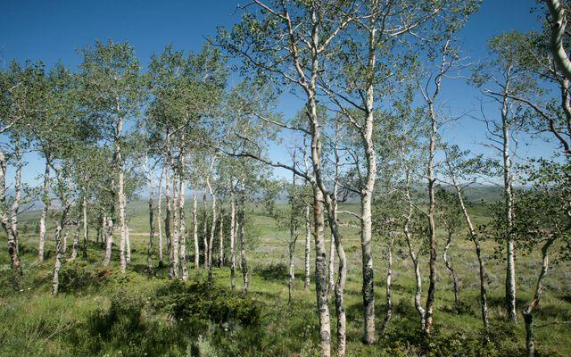 92 Pine Marten - photo 11