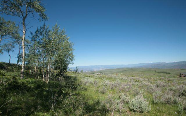 92 Pine Marten - photo 4