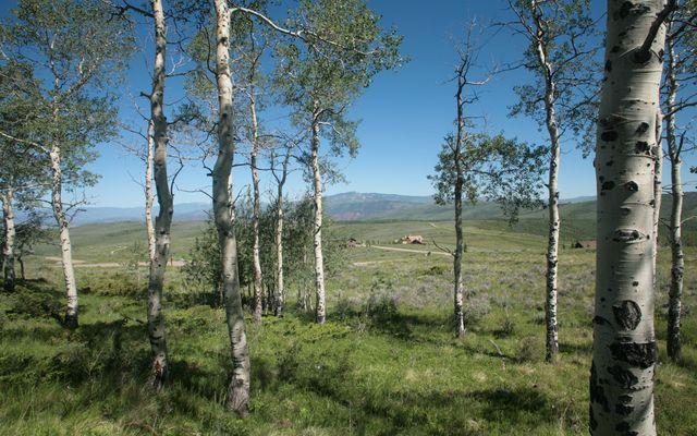 92 Pine Marten - photo 7
