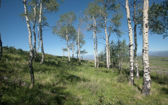 92 Pine Marten - photo 8