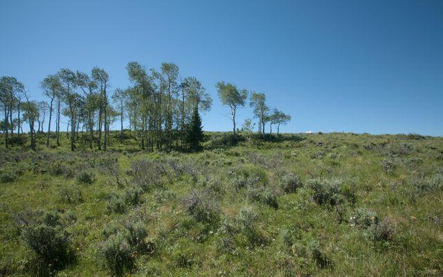92 Pine Marten - photo 9