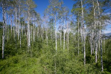 907 Webb Peak Edwards, CO - Image 5