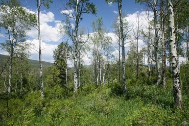 166 East Timber Draw Edwards, CO - Image 5