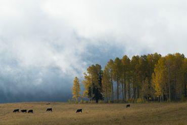 Photo of 1690 Derby Mesa Loop Burns, CO 80426 - Image 101