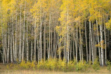 Photo of 1690 Derby Mesa Loop Burns, CO 80426 - Image 103