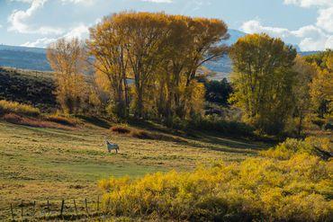 Photo of 1690 Derby Mesa Loop Burns, CO 80426 - Image 107