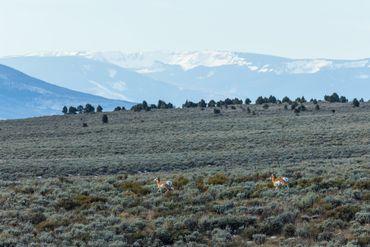 Photo of 1690 Derby Mesa Loop Burns, CO 80426 - Image 112
