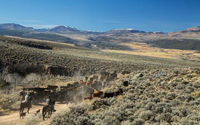 1690 Derby Mesa Loop - photo 117