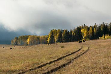 Photo of 1690 Derby Mesa Loop Burns, CO 80426 - Image 94