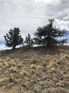 934 ARLAND ROAD JEFFERSON, Colorado 80456