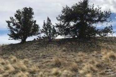 934 ARLAND ROAD JEFFERSON, Colorado 80456 - Image 1