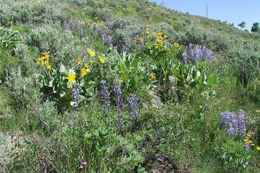 445 Cataract Creek ROAD SILVERTHORNE, Colorado - Image 4