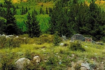 0 CO RD 12 ALMA, Colorado - Image 8