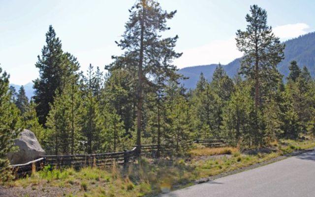 231 Elk Circle - photo 5