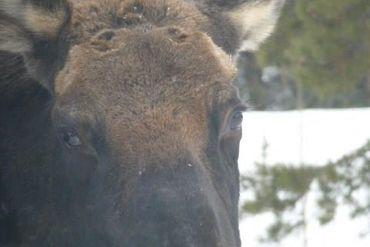 206 Elk Crossing LANE - Image 29