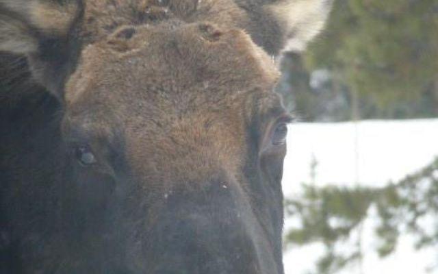 206 Elk Crossing Lane - photo 28