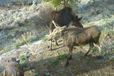 206 Elk Crossing LANE KEYSTONE, Colorado - Image 30