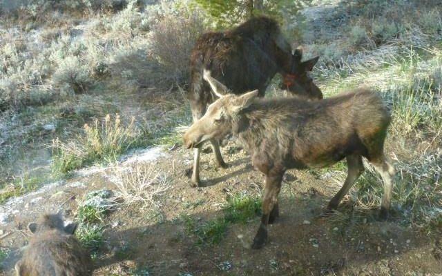 206 Elk Crossing Lane - photo 29