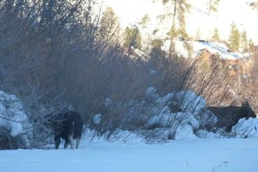 206 Elk Crossing LANE KEYSTONE, Colorado - Image 31