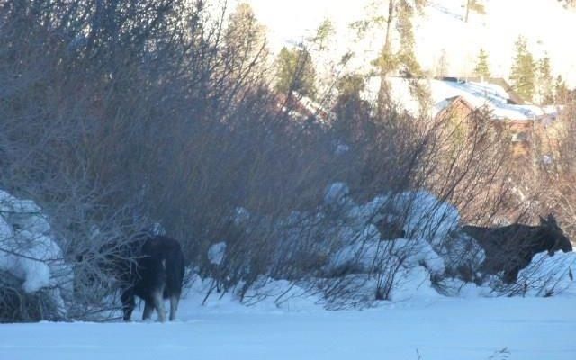 206 Elk Crossing Lane - photo 30