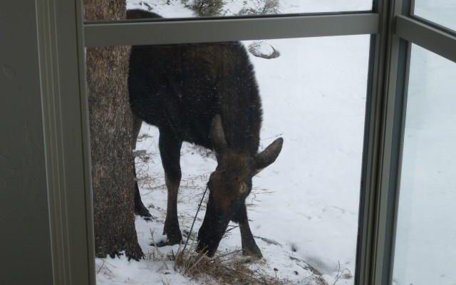 206 Elk Crossing Lane - photo 32