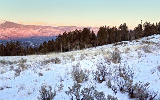 362 Pine Marten - photo 32