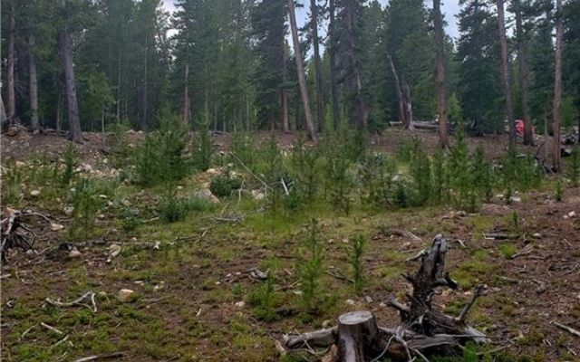 188 Gold Trail Cutoff - photo 8