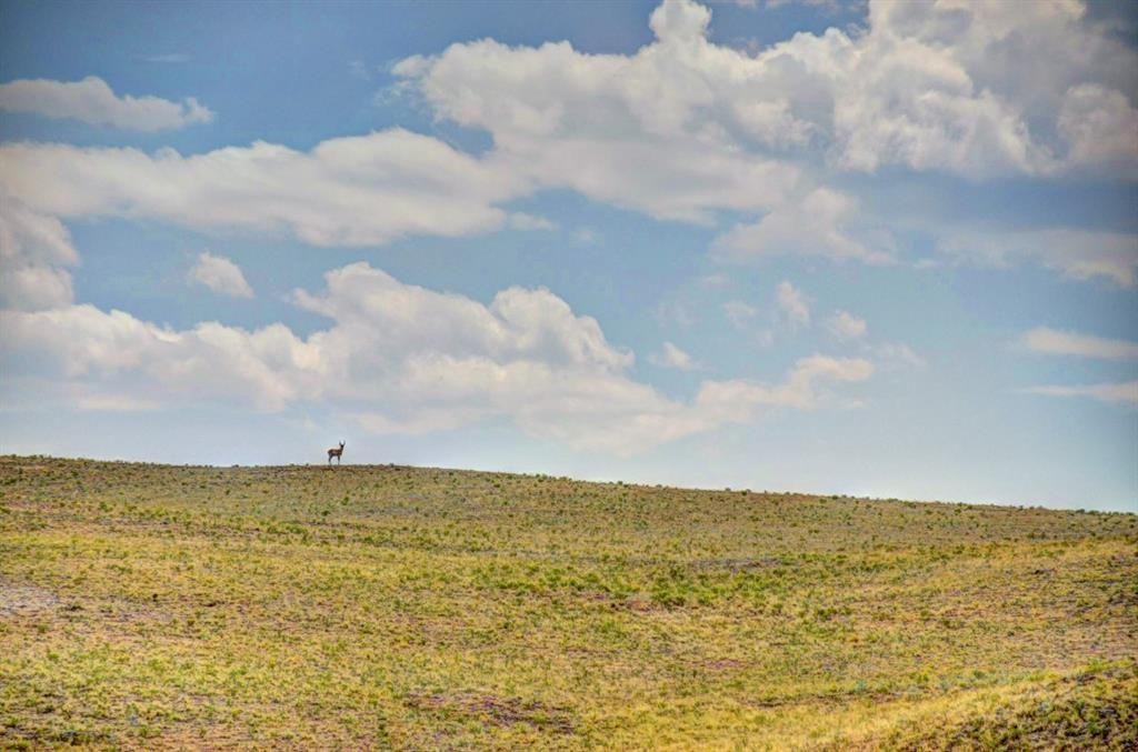 TBD Santee TRAIL HARTSEL, Colorado 80449