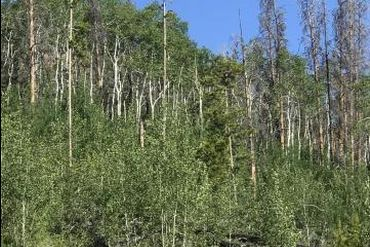 2984 GCR 2415 KREMMLING, Colorado - Image 3