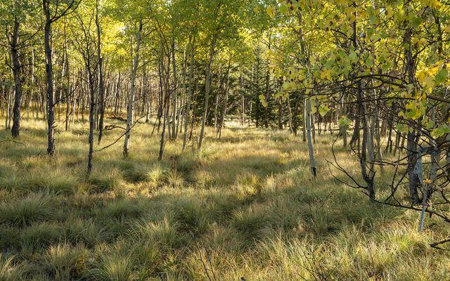 2553 Buffalo Ridge - photo 4