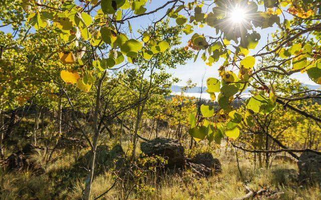 2553 Buffalo Ridge - photo 7