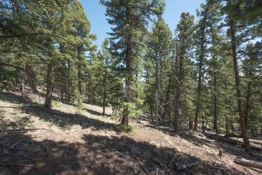 Lot 498 Redhill ROAD FAIRPLAY, Colorado - Image 13