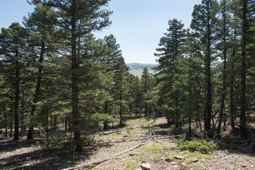 Lot 498 Redhill ROAD FAIRPLAY, Colorado - Image 17
