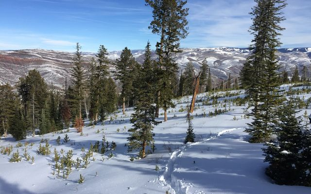 355 Granite Springs Trail - photo 10