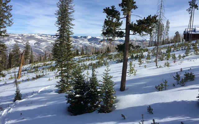 355 Granite Springs Trail - photo 11