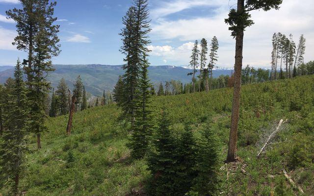 355 Granite Springs Trail - photo 21