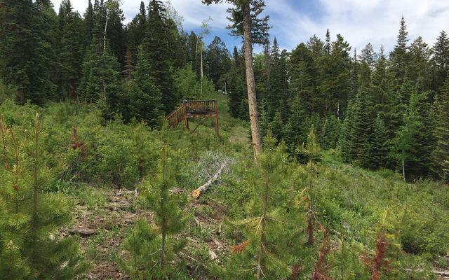 355 Granite Springs Trail - photo 26
