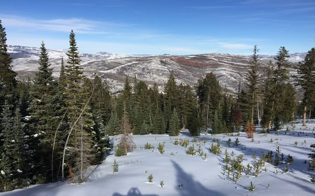 355 Granite Springs Trail - photo 9