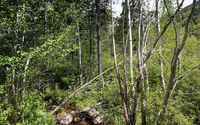 4250 Spruce Way - photo 14