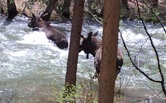 206 Elk Crossing Lane - photo 31