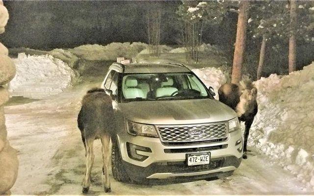 206 Elk Crossing Lane - photo 33