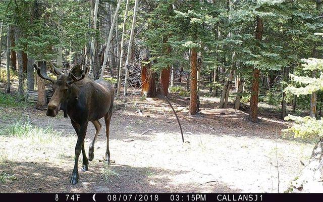 89 Sheep Creek Trail - photo 29