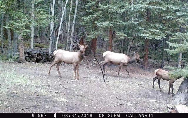 89 Sheep Creek Trail - photo 31