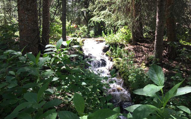 45 Pennsylvania Creek Trail - photo 28
