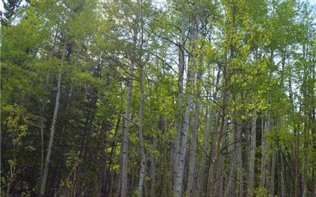 1344 Deer Trail Road - photo 7